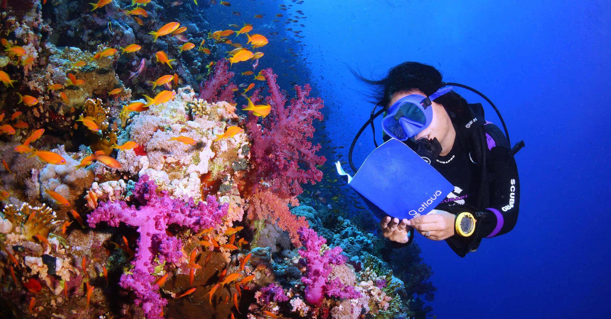 atlaua diving logbook for survey