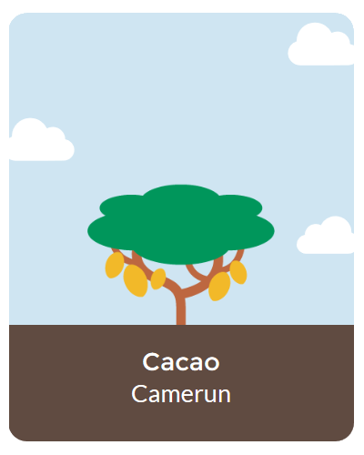 Cacao-Foresta-Atlaua